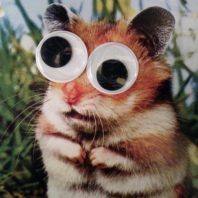 googly squirrel